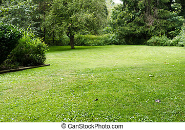 quieto, gramado, com, árvores