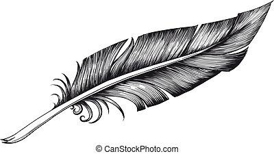 quill pen - Vintage quill pen to write detailed isolated on...