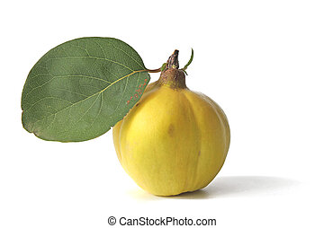 Quince (Cydonia oblonga) - One fruit with a leaf of quince (...