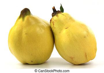 Quince (Cydonia oblonga) - Two fruits of quince (Cydonia ...