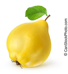 Quince fruit isolated on white