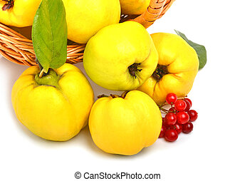 quince in the basket isolated on white background