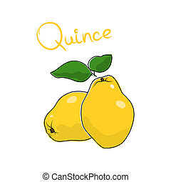Quince isolated on white background - Yellow Quince and text...