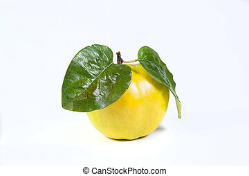 quince isolated on whitw background