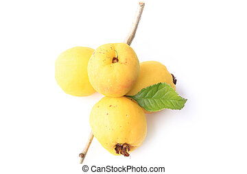 quince japonica isolated on white background