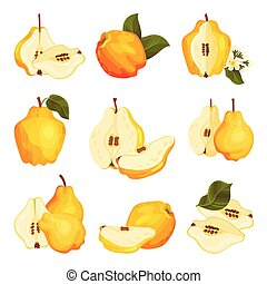 Quince Pome Fruit Whole and Halved Vector Set. Bright Golden...