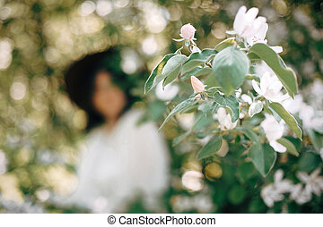 Quince white flowers on tree branch on background of blurred...