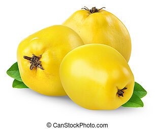 Quince - Yhree quince isolated on white