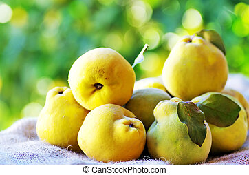 quinces with leaves on the table