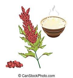 Quinoa. Full color super food hand drawn sketch vector...