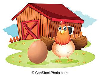 quintal, galinha, ovo