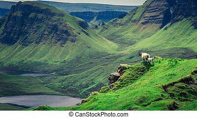 Quiraing in Isle of Skye in summer, Scotland, UK
