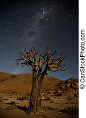 Quiver tree at night with milky way