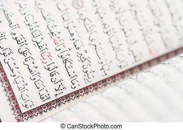 quran, クローズアップ, マレ, 読書, muslim