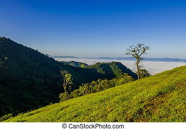 ráno, mlha, do, rainforest