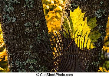râteau, arbre