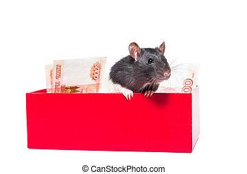 råtta, pengar