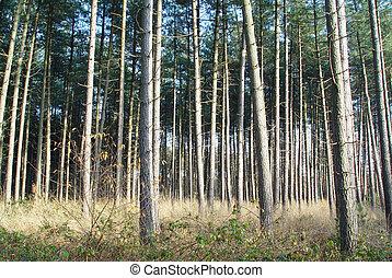 række, i, træer
