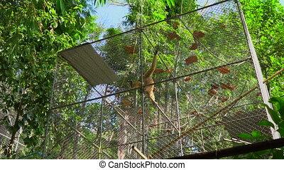 rééducation, shelter., gibbon, centre, singe