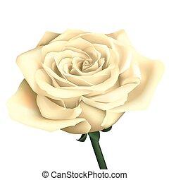 Fleur Rose Isole Realiste Noir Blanc Fleur Detaille Tatouage