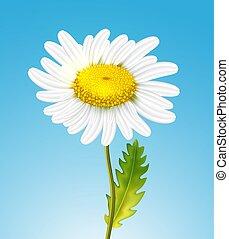 réaliste, vecteur, camomille, pâquerette fleur