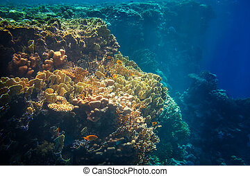 récif, corail