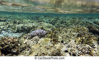 récif, coraux, beau