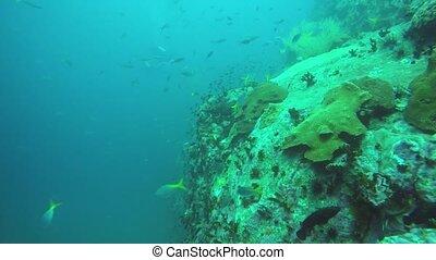 récif, seascape., sous-marin, profond, sport, dur, mer, ...