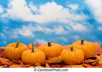 récolte, automne