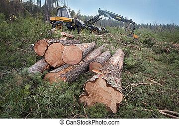 récolte, bois construction