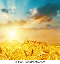 récolte, champ, et, coucher soleil