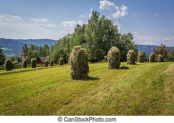 récolte, dans, village montagne