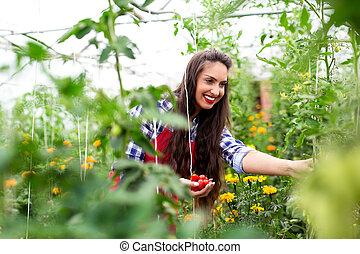 récolte, femme, serre, jeune, tomates