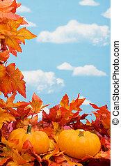 récolte, frontière, automne