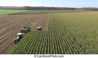 récolte, paysan, vue aérienne