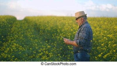 récoltes, cultures, numérique, paysan, tablette, fleur, beau, field., jaune, rapeseed, contre, vérification, champ