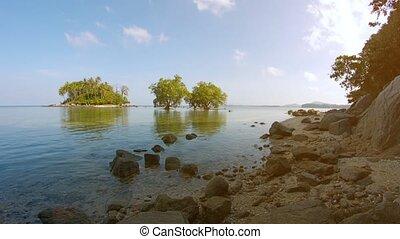région désert, île, exotique, arbres, côtier, petit, mangrove