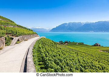 région, de, -, terrasses, vignobles, suisse, terrasses, lavaux
