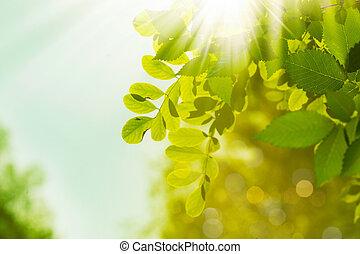 résumé, arrière-plans, ambiant, vert, conception, ton, ...