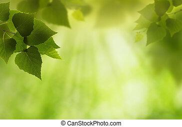 résumé, arrière-plans, ambiant, vert, conception, ton, mondiale