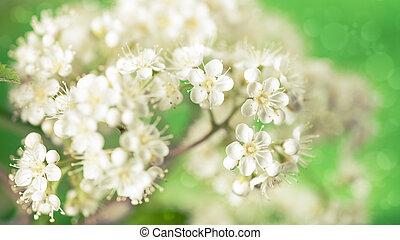 résumé, arrière-plans, rawan, fleurs, conception, floral, ton