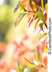 résumé, feuilles, fond, coloré, brouillé