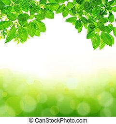 résumé vert, feuille, fond