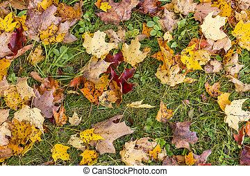 résumé, vue, feuillage, coloré, automne