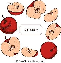 részletes, gyűjtés, kéz, vektor, alma, húzott, magasan