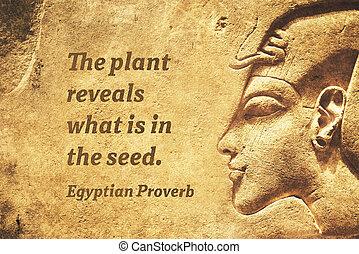 révèle, plante, ep