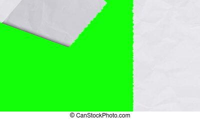 révéler, vertical, écran, -, papier, version, blanc vert, déchirure