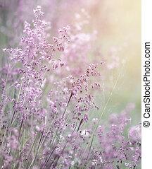 rêveur, champ, fleurs roses