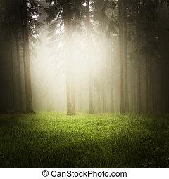 rêveur, forêt