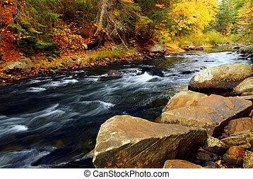 río, bosque, otoño